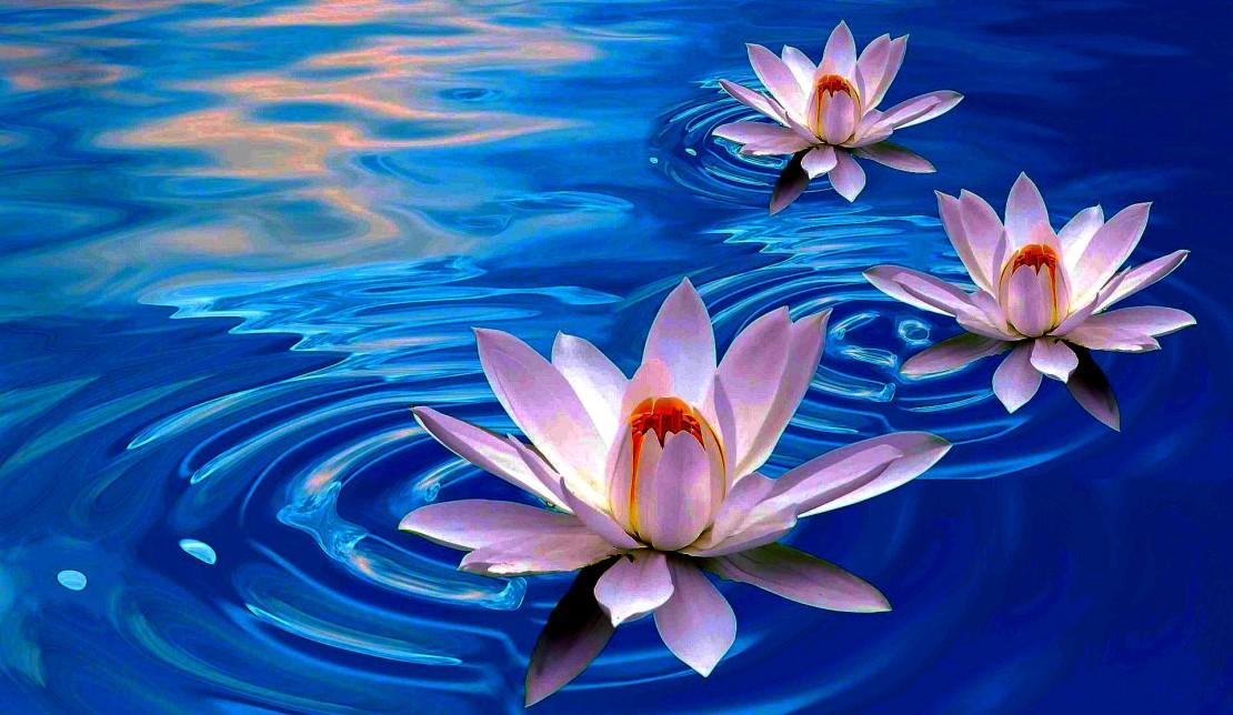 Vipassana Meditation: A Trip Into My Mind